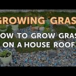 How to Grow Grass on a House Roof