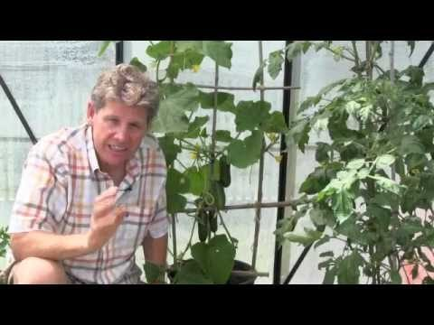 Learn Organic Gardening at GrowingYourGreens