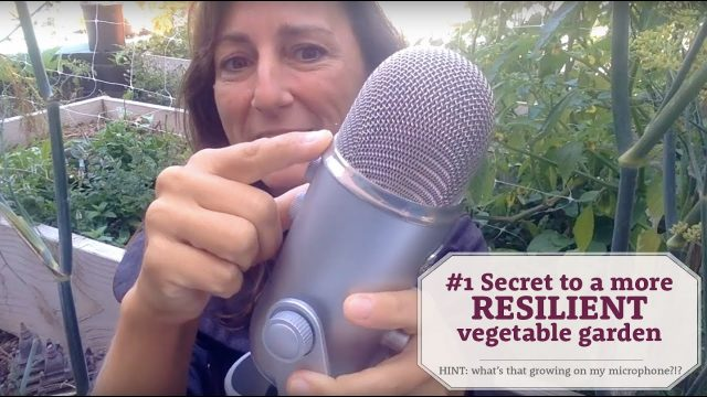#1 Secret to a MORE resilient vegetable garden