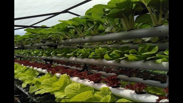 Hydroponic farm in Cambodia  | Intelligent Technology Smart farming | Modern agriculture  Technology