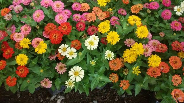 Adding Ornamental Plants In Your Hydroponic Garden – Its Beauty