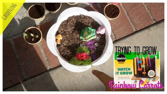 Trying to grow Rainbow Carrots|Kids Miracle Gro Kit