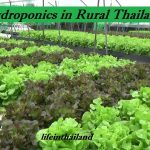 Small Hydroponic lettuce farm next to the highway in rural Thailand.