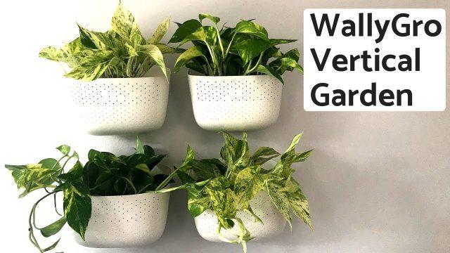 Building an Indoor Vertical Garden with WallyGro