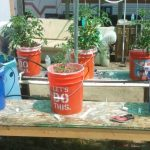 May 1st 2016 Hydroponic green house tomatoes
