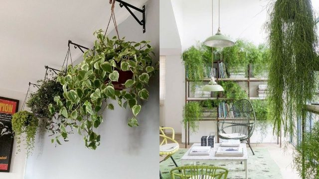 Modern House Interior Garden Ideas || Indoor gardening ideas || Interior Designs