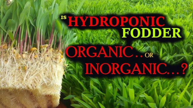 Ashwin Sawant | Is Hydroponic Fodder Organic or Inorganic…?