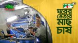 Indoor fish farming | ঘরের ভেতর মাছ চাষ | Shykh Seraj | Channel i |