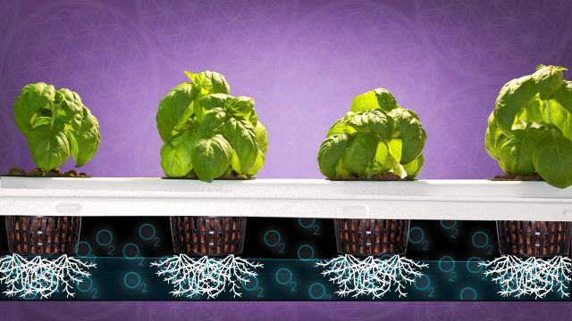 Automated Grow Room Hydroponic Grow Tent Set Up