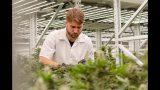 Inside Eve Farms' Cannabis Vertical Farm with Fluence LEDs in the Heart of San Francisco