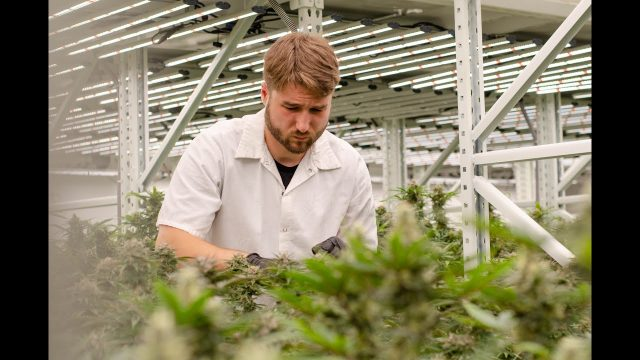 Inside Eve Farms' Cannabis Vertical Farm with Fluence LEDs in the Heart of San Francisco