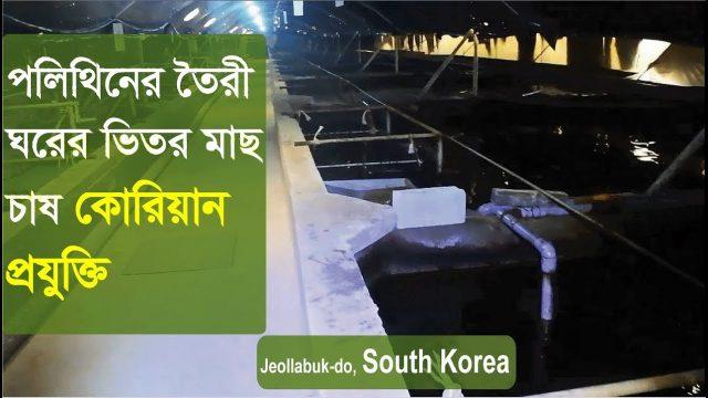 Indoor Fish Farming  | Eel fish farm (Documentary) South Korea | ঘরের ভেতর মাছ চাষ কোরিয়ান প্রযুক্তি