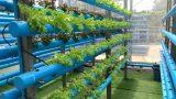 ปลูกผักแนวตั้ง Verticle Farming In Bangkok City
