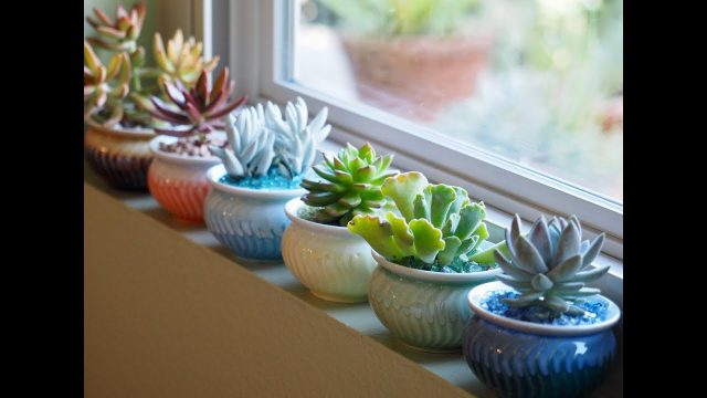 DIY Windowsill Succulents