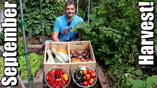 September Vegetable Garden Harvest (2018): Local Food At Its Best!