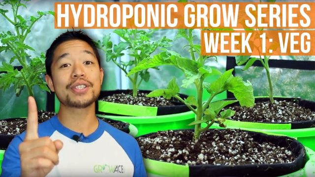 Complete Grow Tent Kit System – Week 1 Grow Journal | GrowAce.com Grow Series