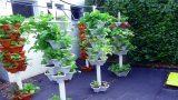 Amazing Vertical Gardening Design Tips | Vertical Garden Ideas for Balcony