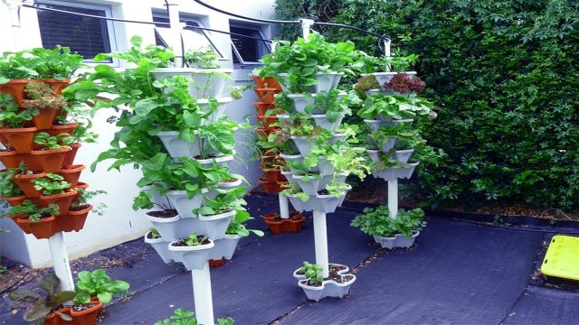 Amazing Vertical Gardening Design Tips | Vertical Garden Ideas for Balcony