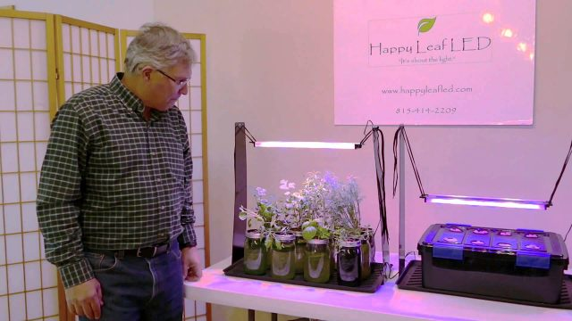 Growing an Indoor Herb Garden | The Passive Hydroponic Method
