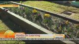 Sustainable School Garden