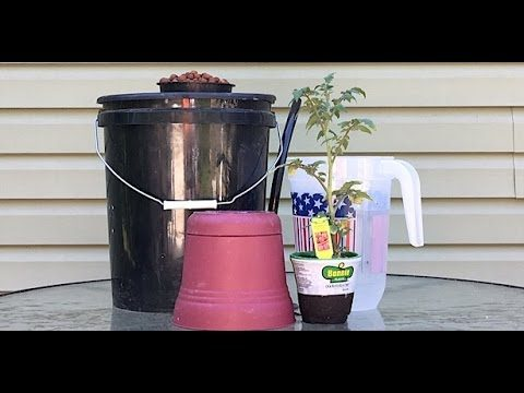 How To Transplant A Dirt Plant Into A Hydroponic System
