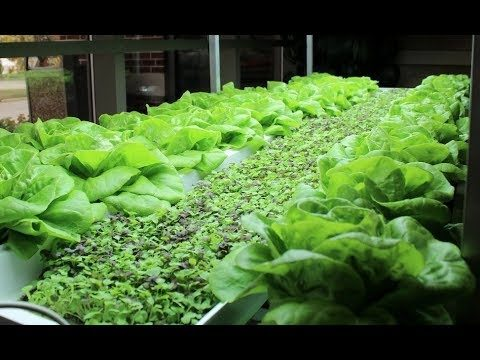 Indoor Farming Which you Can Do Yourself  (Part 2 of 3)