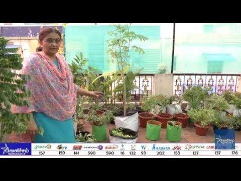 En Veetu Thottathil Epi – 123   Terrace-and-Roof Gardening   Videos   Velicham Tv Entertainment
