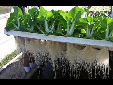 Aquaponics – Intelligent Technology Smart Farming