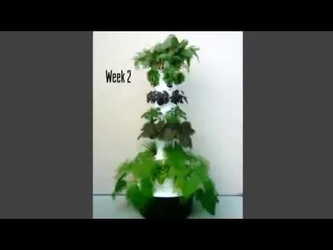 Tower Garden® Grow  4 Week Time Lapse