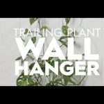 Trailing Plant Wall Hanger   Made By Me Garden   Better Homes & Gardens