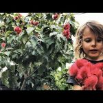 Backyard Garden Tour – AMAZING | Dragon Fruit – Pitaya, part 3
