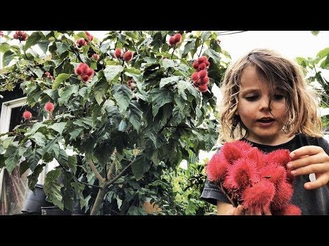 Backyard Garden Tour – AMAZING | Dragon Fruit – Pitaya, part 3