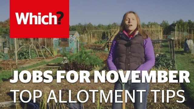 Vegetable gardening jobs for November – Which? Gardening