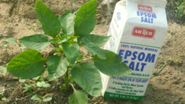 11 Ways to Use Epsom Salt In The Garden – Gardening Tips