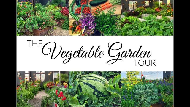 Vegetable Garden Tour & Harvest | September