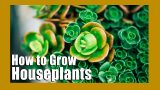 How to grow houseplants   Indoor Gardening tips   Keep your houseplants alive