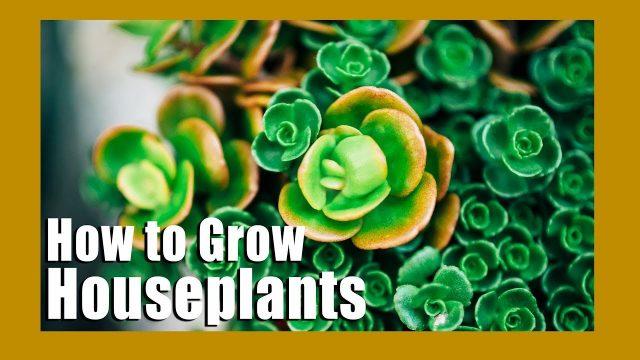 How to grow houseplants | Indoor Gardening tips | Keep your houseplants alive