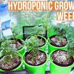 Complete Hydro Grow Tent Kit System – Week 3 Grow Journal | Harvest by week 12