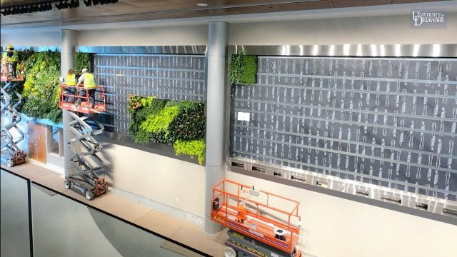 Living Wall installed in the Tower at STAR