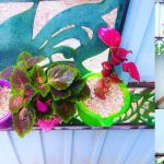 Best Wall Hanging Planter & Gate Decoration Planter   shelf decorative Planters Ideas//GREEN PLANTS