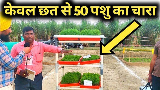 सस्ता हरा चारा पाने की कमाल तकनीक|Hydroponic Grass Fodder farming in india|Hindi