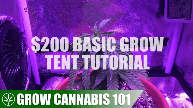 GC101: $200 Basic Grow Tent Setup & Indoor Grow Tutorial
