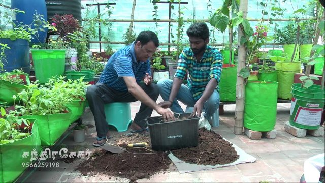 En Veetu Thottathil Epi – 45 | Terrace-and-Roof Gardening | Videos | Velicham Tv Entertainment