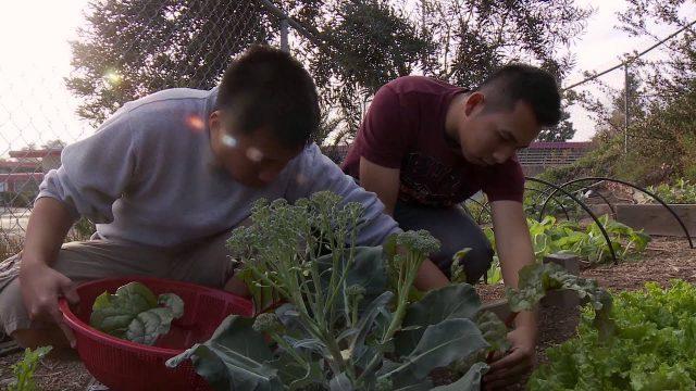 Crawford High School Garden to Cafe Program