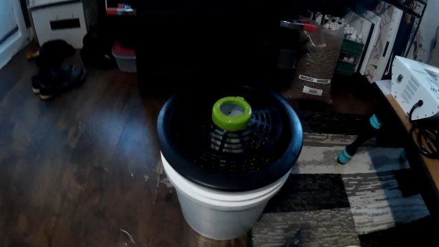 diy hydroponics bucket