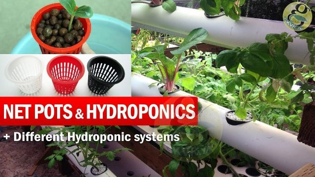 What are Net Pots and Hydroponic System explained | Benefits of Net pots in Gardening