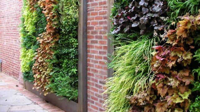 Beautiful Vertical Gardens – Living Walls