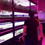 A small  indoor commercial farm in Singapore