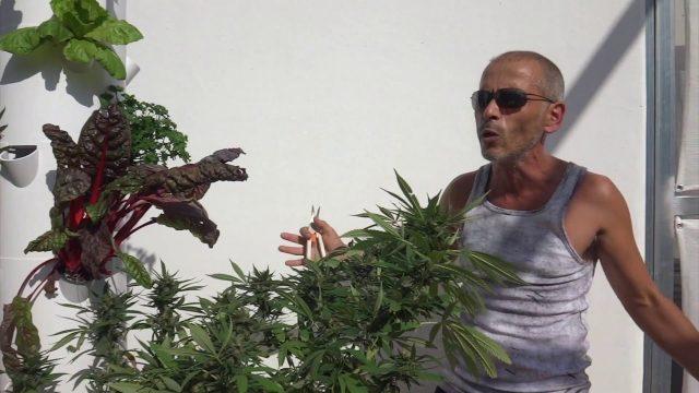 Cannabis aeroponics tower