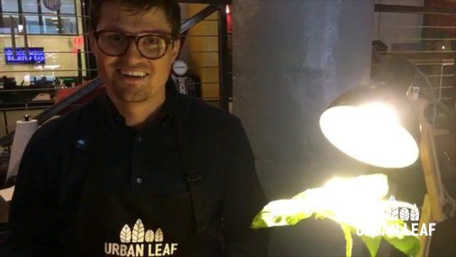 Lighting For Indoor Plants   Indoor Gardening Tips